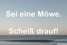 Sei eine Möwe. Scheiß drauf! ... gefunden auf https://www.istdaslustig.de/spruch/4725