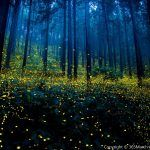 10 Surreal Photos Of Fireflies In Japan That'll Prove These Bugs Are Of Magical… Surreal Photos, Fairy Pictures, Colossal Art, Land Art, How Beautiful, Amazing Nature, Nature Photography, Exposure Photography, Photography Awards