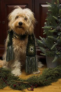 Dog Ready for Christmas / You can Add Santa to Your photos. Try it out for Free at Capturethemagic.com