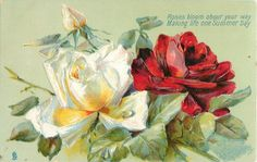 Red and white roses ~ 1908.