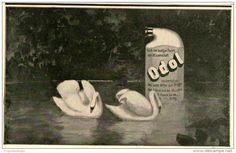 Original-Werbung/Inserat/ Anzeige 1902:  ODOL - ca 180 X 100 mm