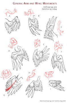 Comparison between arms and wings. Wing-Movement Sheet 2 by Lizkay.deviantart.com on @deviantART