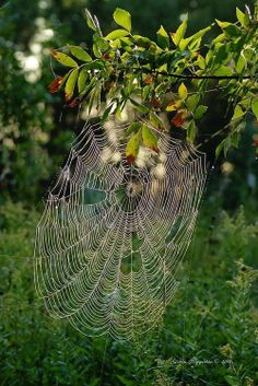 It's great cuz I don't see a spider in it. LOVE the webs... not to fond of them what makes em!