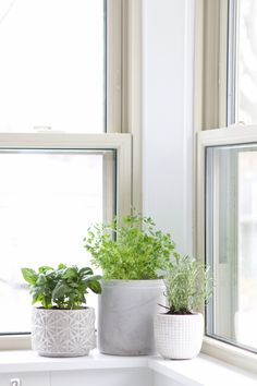 to create an indoor herb garden in your kitchen, including tips on which herbs to buy and how much water they need! Come check out these gorgeous indoor plants! garden indoor window sill How To Create A Fresh Herb Garden Kitchen Garden Window, Kitchen Window Sill, Herb Garden In Kitchen, Kitchen Plants, Diy Herb Garden, Garden Windows, Herb Gardening, Plants In Kitchen, Organic Gardening