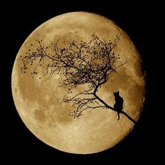 Harvest Moon share moments - Beautiful Mother Nature