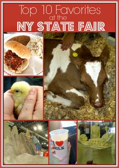 Top 10 Favorites at NY State Fair - Baby animals, food, horses, entertainment and more