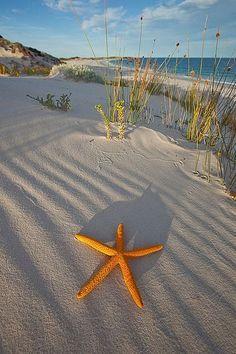 Seaside - Fun At The Beach! on we heart it / visual bookmark on imgfave I Love The Beach, Am Meer, Beach Scenes, Ocean Beach, Sunset Beach, Ocean Life, Belle Photo, Beautiful Beaches, Starfish