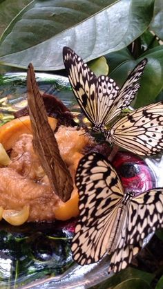 The butterfly palace :)