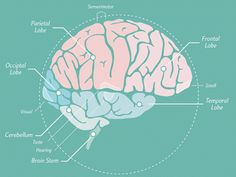 Judy Willis MD gives 5 steps towards building brain literacy in elementary students.