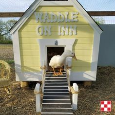 """House for ducks: """"This is our Duck Inn in Michigan. My husband built it for our backyard ducks. We made one wall removable for easy cleaning. The ramp lifts so we can keep the ducks inside at night. There are also two windows - one on each side."""" – Michelle F., Purina Poultry Facebook fan"""