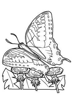 un papillon qui vole au dessus des fleurs belle image colorier mothcaterpillarcoloring pagesbutterflycoloringflowersother