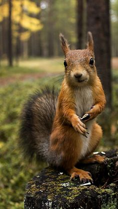 Squirrel with an attitude