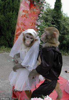 Animals_Weddings_8