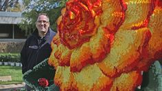 Australian Lego expert Ryan McNaught has unveiled a two-metre Lego begonia at the Ballarat Botanical Gardens. (Image: ABC/Margaret Burin)