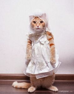 """I will not marry him! Neither him, nor any other disgusting Tom! I refuse to spend my whole life as a """"kitten mill!"""" I would prefer a Convent!"""