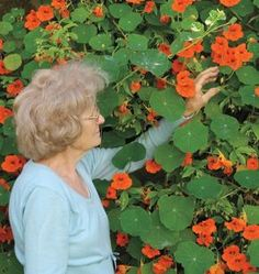 Plant Tall Single Mix Nasturtium Seeds for a trailing plant that will travel great lengths. Use in a planter for a dramatic effect of lively classic colour. Herb Garden, Garden Plants, Cucumber Beetles, Canary Birds, Dramatic Effect, Annual Flowers, Garden Seeds, Companion Planting, Drought Tolerant