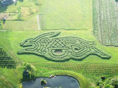 "2010 Treworgy Family Orchards Corn Maze, ""The Rascally Rabbit"". Taken by Jon Kenerson on July 20, 2010"
