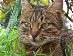 11 Ways To Rid Feral Cats Cats Cats Outside Cat Spray