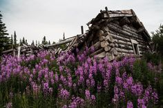 Images of a modern frontier: Whitehorse, Yukon All About Canada, Yukon Territory, Midnight Sun, Photojournalism, Some Pictures, Small Towns, Places To Visit, Scenery, Adventure
