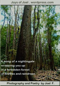 The Poetry of My Life Through My Writings and Journeys Rhyming Poems, Nature Poem, Forbidden Forest, Poems Beautiful, Writing Poetry, Rain Drops, Nature Photography, Waterfall, Journey