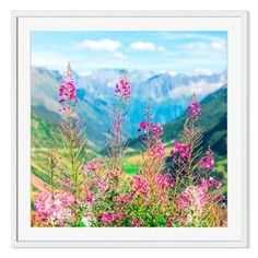 Shop for Gallery Direct Swiss Alps with Wild Pink Flowers Print on Paper Framed Print. Get free delivery at Overstock.com - Your Online Art Gallery Store! Get 5% in rewards with Club O! - 17839574