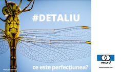 #DETALIU – credem ca diferenta e facuta de fiecare detaliu. Toate produsele noastre trec printr-un proces amplu de verificare a calitatii. Mai mult de atat, in proiectare ne-am gandit la fiecare element, la fiecare material si la integrarea lor in mediul in care va ajunge fiecare usa. http://record-romania.com/ce-este-perfectiunea/