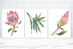 Set of 3 Australian Protea Set Botanical Leaf Set, Native Protea Watercolor kitchen art, Leaves Art Protea Print Scandi Art Print Posters Flor Protea, Protea Flower, Flowers, Scandi Art, Leaf Art, Kitchen Art, Art Inspo, Flower Art, Watercolor Art