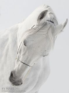 lovemewhite:  White Stallion by mari-mi