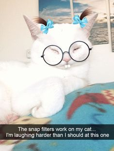 Cats|Filtered Dressed Kitty|30  Hilarious Cat Snapchats That Are Im-Paw-Sible Not To Laugh At (New Pics)|Source:boredpanda.com|-Now I wouldn't pin this if this cutie was being forced to wear actual real glasses and hair bows, but since it's a filter, I figured we could all use a giggle today. This kitty is such a little sweetheart. Funny Cats, Funny Animals, Cute Animals, Crazy Cat Lady, Crazy Cats, Snap Cat, Funniest Snapchats, Funny Captions, Funny Animal Pictures