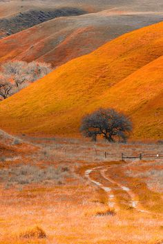 Road less travelled by Chris Odchigue | Photography, via Flickr  taken Mar 26, 2011 in California, US