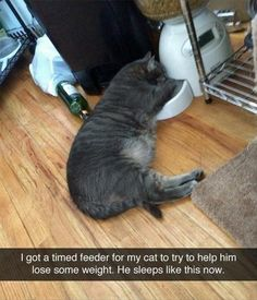 Are we ignoring the empty bottle of wine next to the cat??? Are we sure he's just asleep?? Lol   Attack Of The Funny Animals - 40 Pics