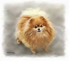 I created this painting using Painter X of my wonderful Pomeranian Gabrielle. ImagesbyBK .com