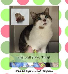 Toby is a lucky cat - he needed surgery to remove a piece of a toy that was obstructing his intestinal tract. He's feeling much better now. (Apr. 24, 2015)