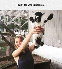 Funny pictures about Goats Are The Most Underrated Animal Ever. Oh, and cool pics about Goats Are The Most Underrated Animal Ever. Also, Goats Are The Most Underrated Animal Ever photos. Funny Animal Photos, Cute Funny Animals, Cute Baby Animals, Animal Memes, Funny Cute, Funny Dogs, Funny Pictures, Funny Goat Memes, Animal Mashups