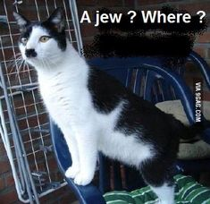 Image result for nazi cat