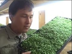 Video - How to Grow a MicroGreens Vegetable Garden Year Round Inside Your Home Indoor Vegetable Gardening, Greenhouse Gardening, Organic Gardening, Growing Microgreens, Growing Vegetables, Aquaponics Kit, Hydroponics, Sprout Recipes, Grow Your Own Food