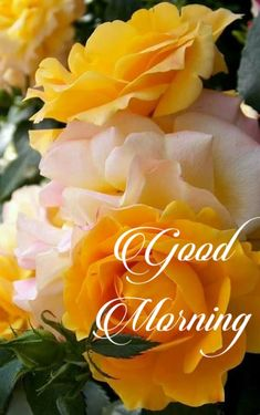 Good morning wishes Good Morning Wishes Quotes, Good Day Wishes, Good Morning Beautiful Quotes, Good Morning Dear Friend, Good Morning Roses, Funny Good Morning Messages, Good Morning Msg, Good Morning Thursday, Good Morning Cards