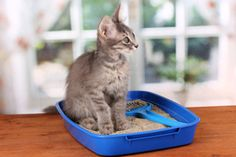 Eliminating Kitty Litter Odors: Controlling Cat Litter Stink | Stretcher.com
