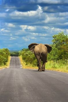 Kruger National Park, South Africa.