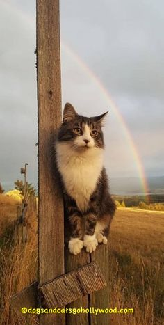 This Cat Sings Somewhere Over The Rainbow. Listen!