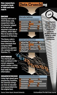 Researchers have encoded an entire book into the genetic molecules of DNA and then accurately read back the text