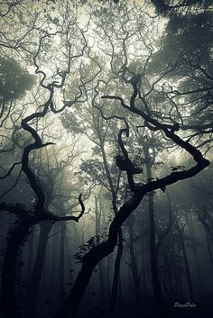 Photo Bosque misterioso by Paco Polo on 500px