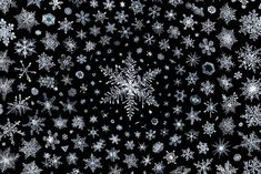 Snowflakes have become an obsession of mine as an extreme macro photographer, but I never thought I would be able to take it this far: 2,500 hours of work