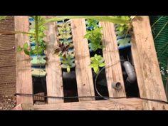 Aquaponics Geodome - nieuwe kreeften om mee te kweken en om de wortels schoon te houden - YouTube