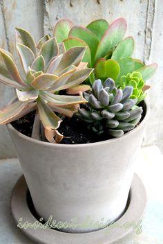 Contemporary succulent container mix