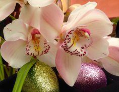 Easter Greetings! Cymbidium Orchids Etsy Shop SmartBlondes Handmade@Amazon/ Shop Smart Blondes