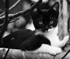 Kitty Formiga...now she is happy! B/W