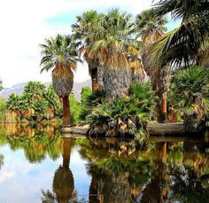 Agua Caliente - Things to do in San Diego
