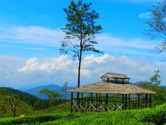 pastoral rural view, Sri Lanka