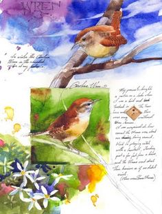 Wren field sketches by Stan Fellows ~ we have little wrens like these, and their babies, in our birdhouse right now!
